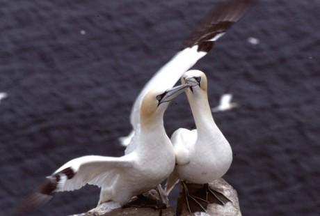 Les ailes du rivage