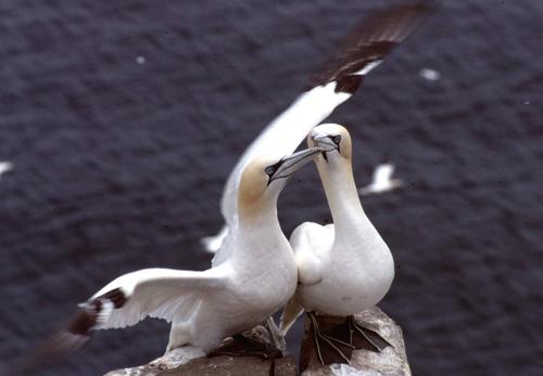 Les ailes du rivages